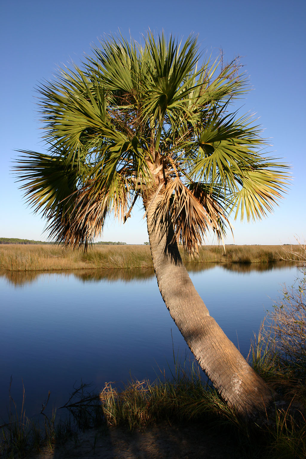 Natual Palms Of Florida Pictures 26